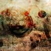 Inkographie 23 - Art numérique - digital art