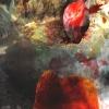Inkographie 26 - Art numérique - digital art